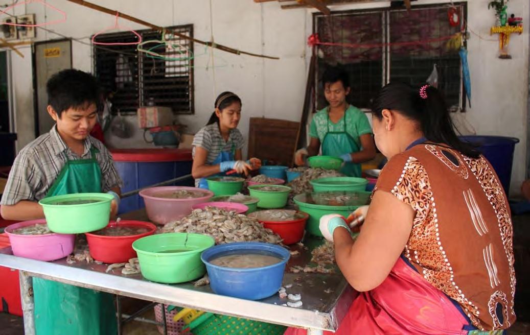 Trabajo infantil para la importación barata de camarones